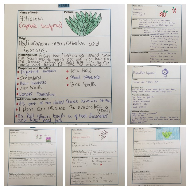 Healthy Herbs in CladdaghSchool